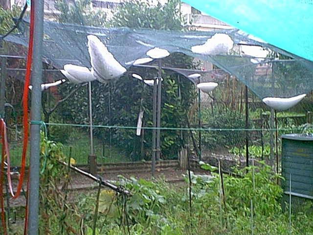 La grandinata del 23 Settembre 2002 a Casnate ( CO ) - parte prima
